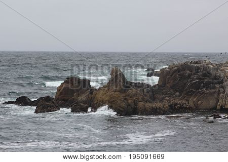 Four small birds flying low in the distance over jagged dark brown rocks surrounded by gray water and waves of white and teal foam on a cloudy day in Pacific Grove, California.