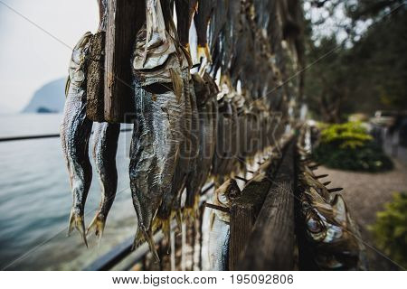 Sardines hang in the dryer, on the shore of Lake Iseo Italy