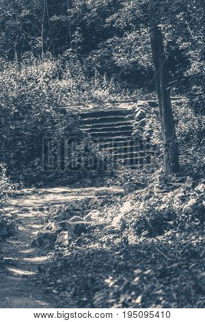 Old vintage photo. Park forest steps trees stone Sunny day shadow copy space