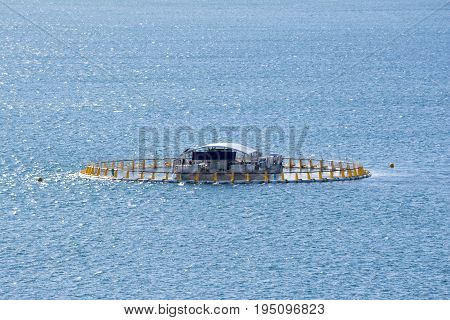 Victor Harbor South Australia: July 10 2017 - Tuna Pen to be used to grow southern bluefin tuna with the intent to enable tourists to feed and swim with them. Situated near Granite Island. Part of the Fleurieu Peninsula.