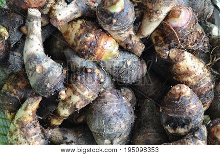group of stcking raw Taro (Yautia Lila) close-up fresh japanese taro in fresh market