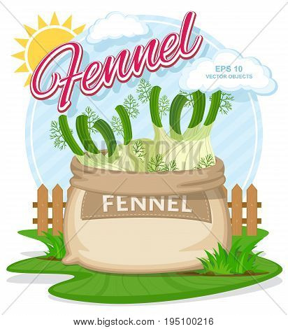 Vector illustration of eco products. Fennel in burlap sack. Full sacks with fresh vegetables. Bag with harvest on the summer garden. Harvesting and food concept