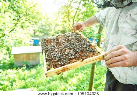 Cropped shot of a beekeeper holding honeycomb with bees while harvesting honey in his apiary.