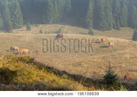 Black Forest Farming Land For Grazing Cows