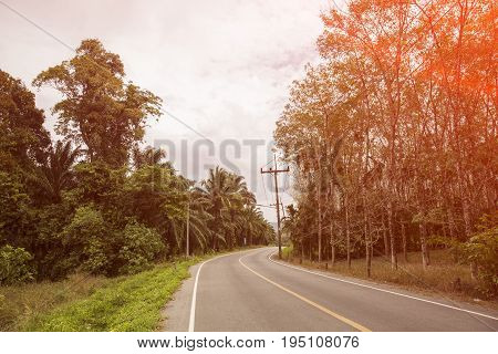 Curved road in tropics .Road turn in forest landscape. Road in tropical forest in sunlight. Dangerous road turn.