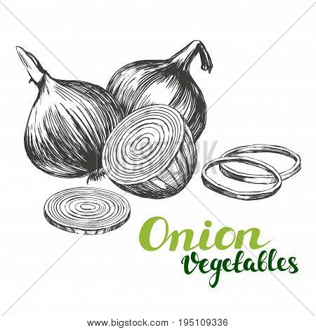 onion vegetable set hand drawn vector illustration realistic sketch
