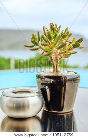 Green crassula in a ceramic pot and a silvery metallic ashtray on a table against a blue pool and sea landscape. Back background blurred