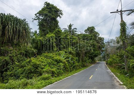 Curved Road In Tropics .road Turn In Forest Landscape. Road In Tropical Forest In Sunlight. Dangerou