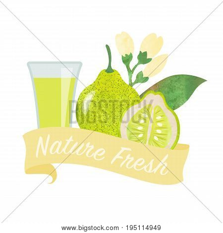 Colorful watercolor texture vector nature organic fresh fruit juice banner pomelo