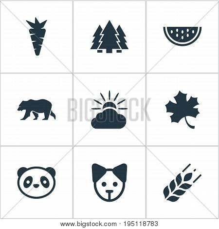 Vector Illustration Set Of Simple Bio Icons. Elements Frond, Jungle, Cloud And Other Synonyms Animal, Polar And Sun.