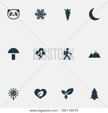 Vector Illustration Set Of Simple Nature Icons. Elements Travel, Frost, Crescent And Other Synonyms Sunflower, Leaf And Herb.