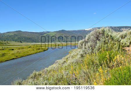 The Lamar River cuts its way through the Lamar Valley in Yellowstone National Park.
