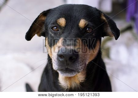 mutt dog sad animal head  black domestic