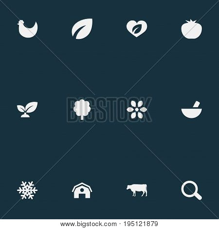 Vector Illustration Set Of Simple Ecology Icons. Elements Forest, Life, Dairy And Other Synonyms Frost, Magnification And Organic.