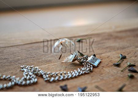 Jewelry whit dandelion seed in the glass