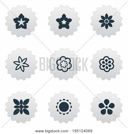 Vector Illustration Set Of Simple Flower Icons. Elements Cypress, Bouquet, Narcissus And Other Synonyms Cypress, Gladioli And Flower.