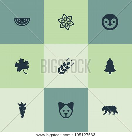 Vector Illustration Set Of Simple Nature Icons. Elements Timber, Frond, Grain And Other Synonyms Tree, Leaf And Fir.