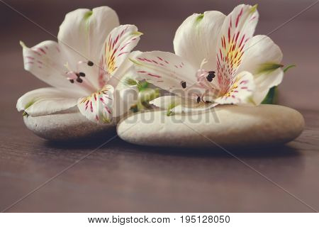 Stones For Massage With White Flowers Of Alstroemeria Lie On A Wooden Surface, Preparation For Spa P