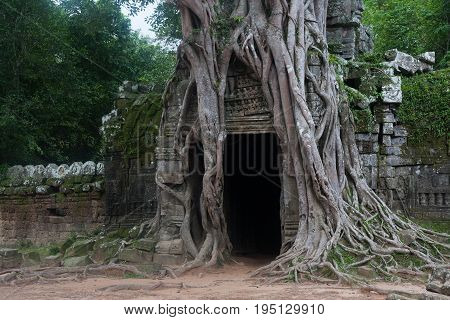 Ancient Door entangled with old trees around in Ankgor wat mossy stone wall Cambodia