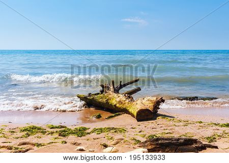 Black sea coast with stones and wood trunk in the foreground on sand beach in Bulgaria.