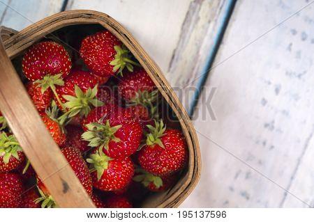 Garden Strawberries in wooden basket isolated on blue wooden background