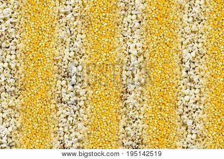 Background dry golden corn corn with stripes of delicious air popcorn successively texture natural pattern