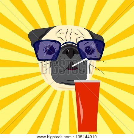 Head of pug drinking soda on yellow starburst background. Pug in sunglasses. Vector illustration