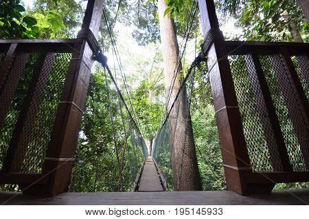 Poring Treetop Canopy Walk