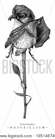Vector illustration with hybrid tea rose drawn by hand. Graphic drawing pointillism technique. Botanical natural collection. Black and white floral element isolated on white
