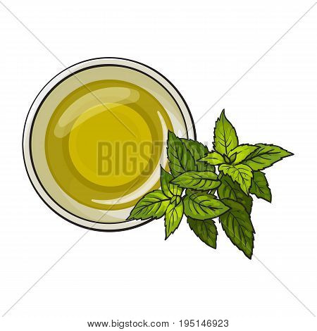 Bowl of natural oil massage decorated with fresh mint leaves, top view sketch vector illustration on white background. Top view hand drawing of organic oil massage with mint leaves, spa accessory