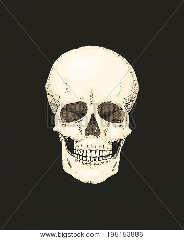 Realistic Skull with the color of the bone on black background. engraved hand drawn in old sketch and tattoo or vintage style. close up pirate