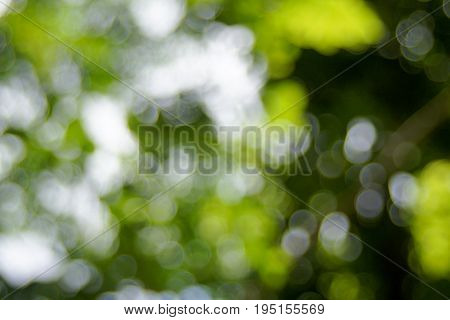 Abstact defocus bokeh light background made of forest style.