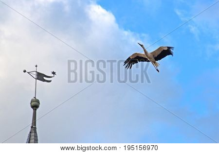 stork flying over a church steeple blue sky and clouds