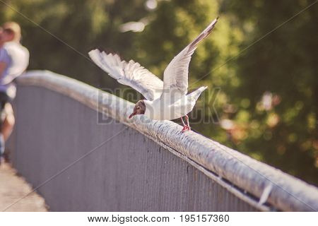 a seagull taking off the bridge rail with wide wings