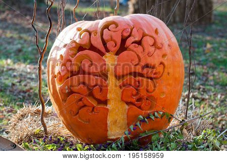 CHADDS FORD, PA - OCTOBER 26: View of Tree Pumpkin at The Great Pumpkin Carve carving contest on October 26, 2013