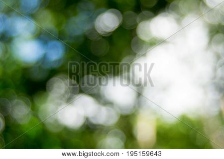 Abstact defocus bokeh light background made of forest style