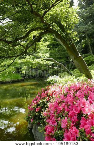 Vertical green plants and pink flower in the Japan private zen park