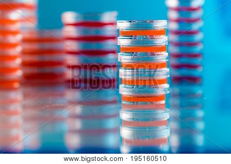 Petri dishes with biological samples  for medical and biological analyzes