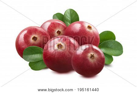 Cranberry isolated on white background as package design element