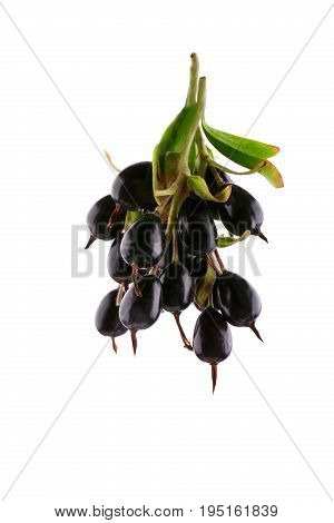 Macro photo of fresh and beautiful black currant, isolated on a white background. Close-up black currant. Tasty ripe black currant. Sprig of fresh, healthy black currant.