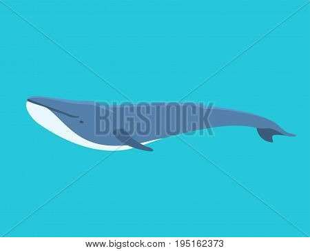 Vector whale dolphin illustration marine mammal north endangered surface deep drawing humpback ocean marine mammal. Underwater wildlife aquatic animal character.