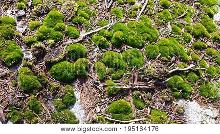 Ground covered in bright green moss and broken twigs and sticks
