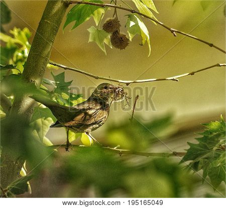 female bird with twigs in their beak to arrange the nest