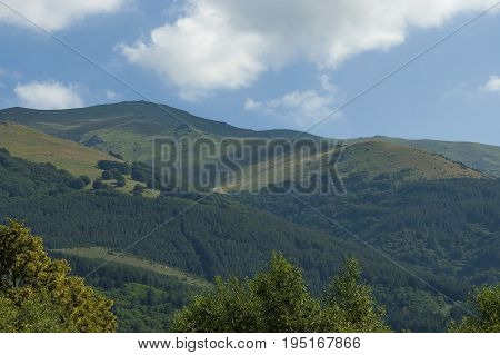 Majestic mountain top overgrown with coniferous forest, valley and grass glade, Central Balkan mountain, Stara Planina, Bulgaria