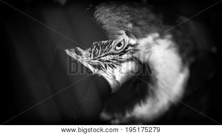 Art portrait of a Ara parrot, Russia