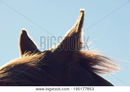Closeup of a brown horse's ears against the sky