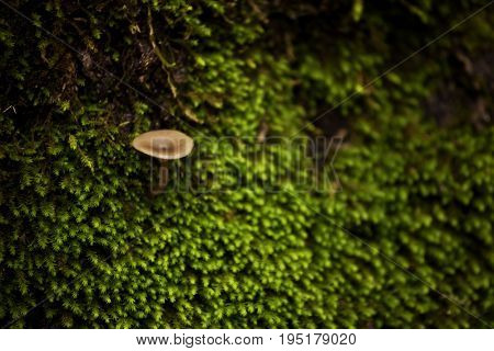 Mushrooms and moss in the forest