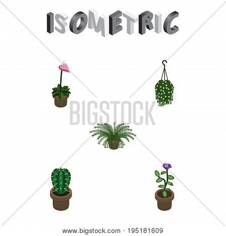 Isometric Plant Set Of Blossom, Grower, Plant And Other Vector Objects. Also Includes Peyote, Hanging, Pot Elements.
