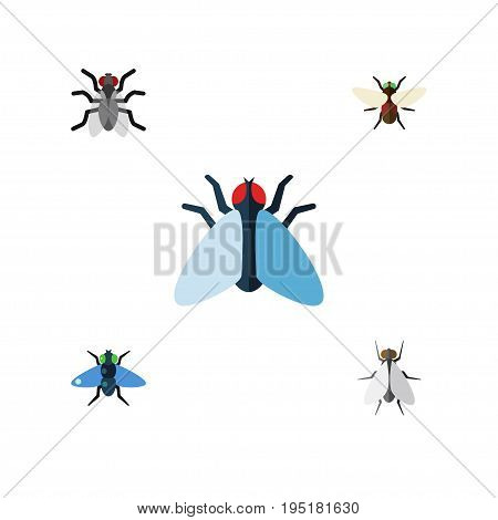 Flat Icon Buzz Set Of Gnat, Bluebottle, Hum And Other Vector Objects. Also Includes Mosquito, Dung, Bluebottle Elements.