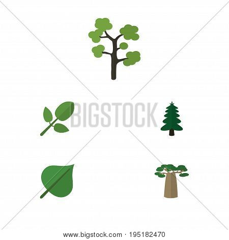 Flat Icon Bio Set Of Garden, Hickory, Baobab And Other Vector Objects. Also Includes Hickory, Foliage, Baobab Elements.